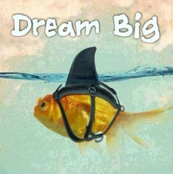 "fish wearing shark fin with caption ""dream big"""