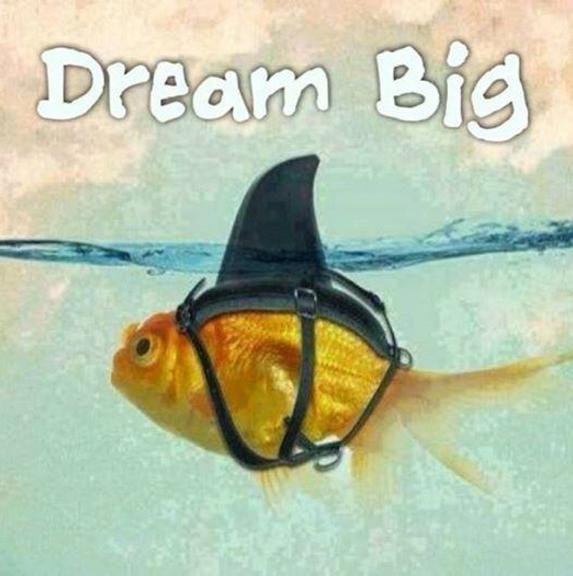 "fish wearing shark fin with caption ""dream big"""