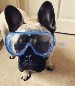 Dog in safety goggles