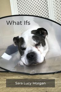 What Ifs - Winston in his cone of shame after surgery.